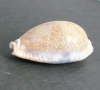 cowrie 4_3