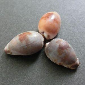 Medakara7