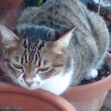 植木鉢ネコ