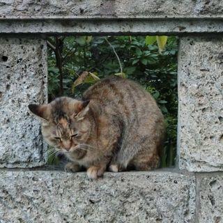 塀の中の猫