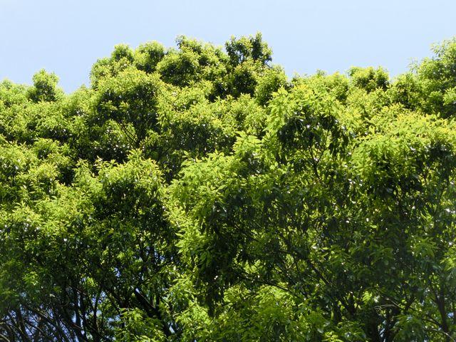 Spring green 3