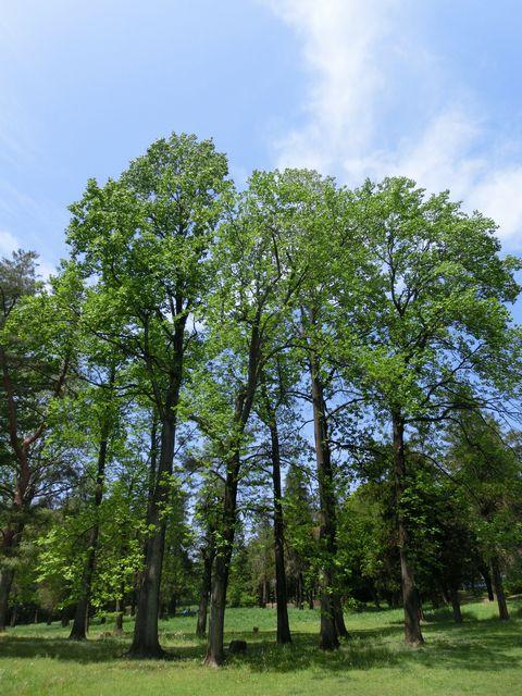 Spring green 6