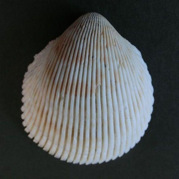 Nagazaru151121a