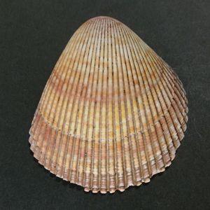 Zarugai151121a