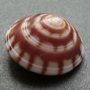 Koguruma151121b