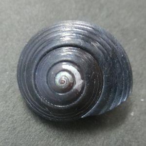 Kisago160122d