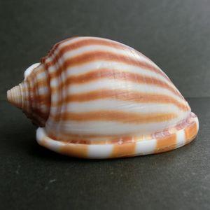 Kazuragai161118i