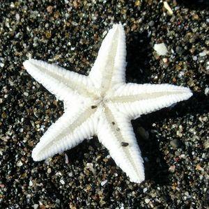 Starfish161211a