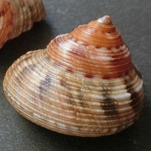 Ebisugai04
