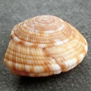 Kuriironawameguruma04