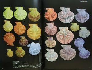 Shells Variation