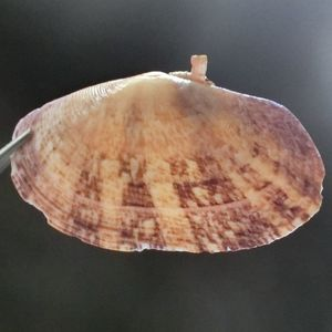 Ashigai180205e