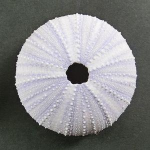 Sirahigeuni1805c