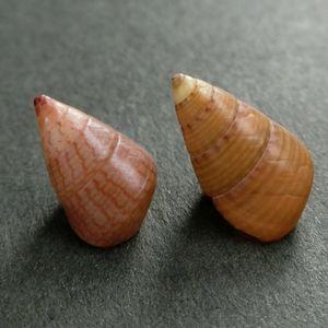 Kaidochigusa180529f