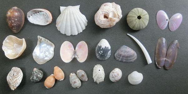 Shells20