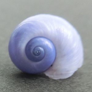Rurigai180907c