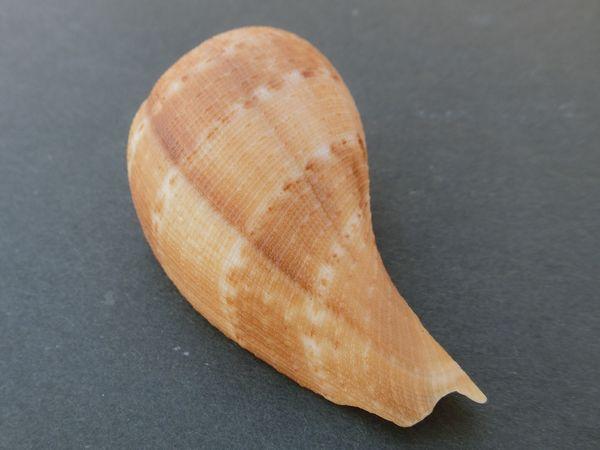 Biwagai181002f