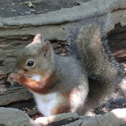 Squirrel181007a2