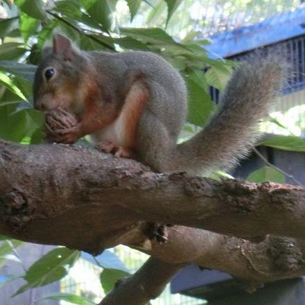 Squirrel181007b