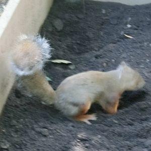 Squirrel181007c