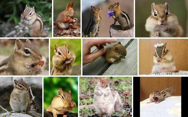 Squirrel_img