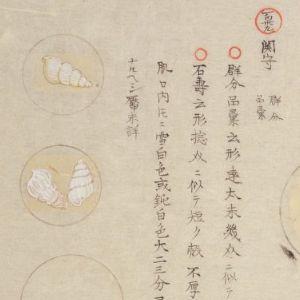 Mokuhachifu7149