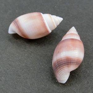Ooshinomigai190114b