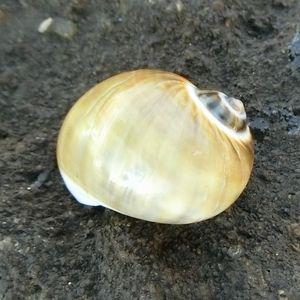 Ebikanohama210104f