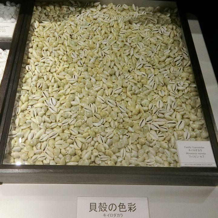 Kiirodakara210721a