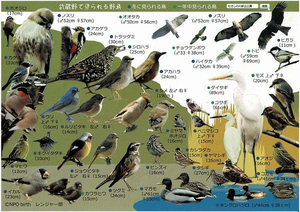 Musashinobirds