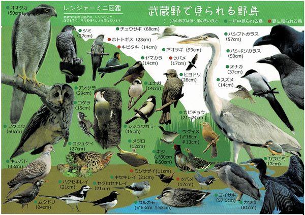 Musashinobirdsa