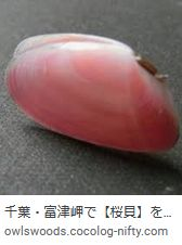 Sakuragai040818a