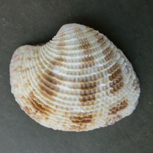 Satumaasari210415c