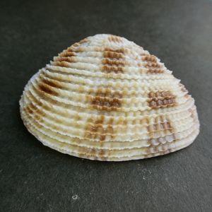 Satumaasari210415h