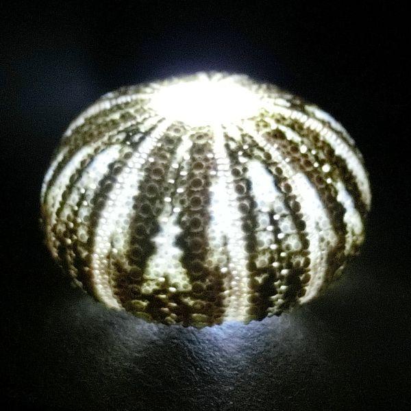 Unilamp09