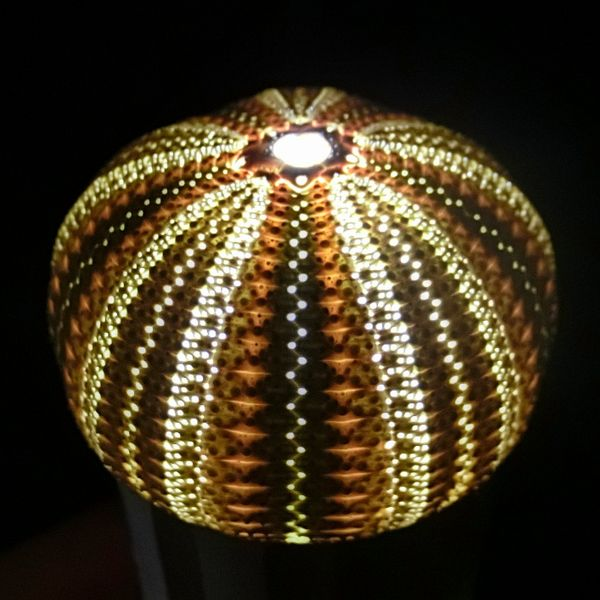 Unilamp_kosidaka02